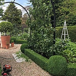Hedge-Trimming-050719
