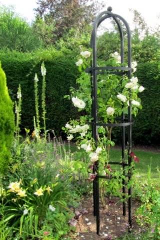 rose obelisk garden trellis garden ftempo. Black Bedroom Furniture Sets. Home Design Ideas