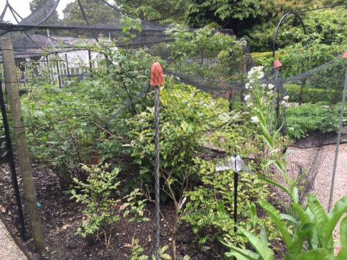 Kitchen-Garden-220616
