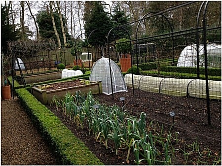 Kitchen Garden January 16