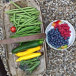 Kitchen-Garden-Harvest-130718