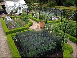 Kitchen Garden 220615