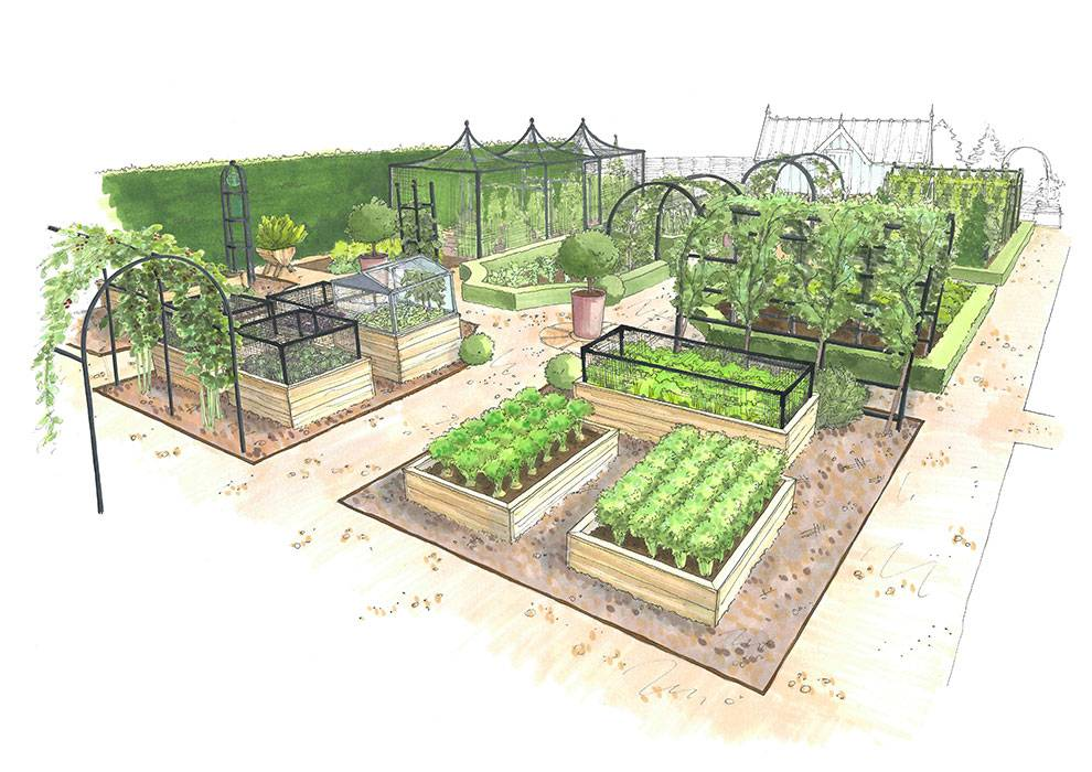 Kitchen Garden Back View illustration