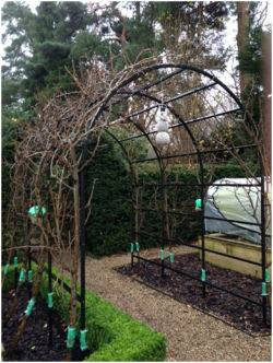 Kitchen Garden Pergola