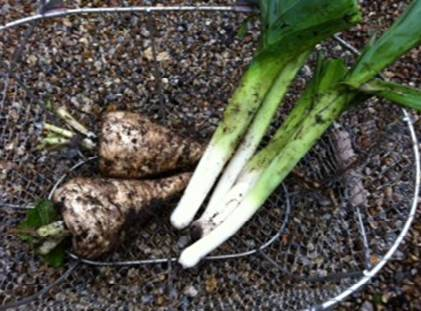 Parsnips and Leeks