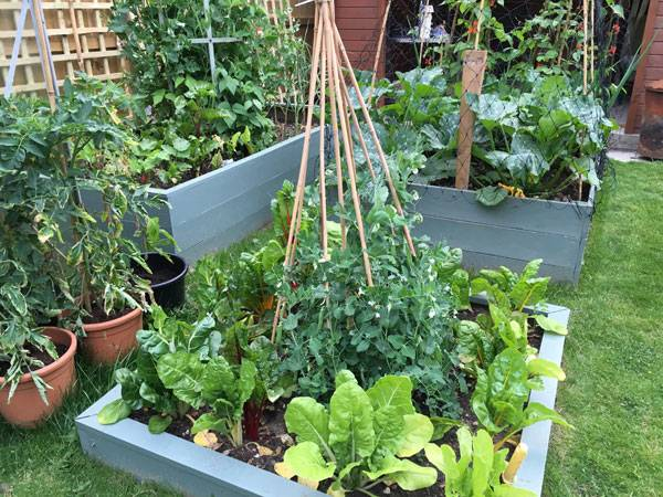 Sheena Raised Bed
