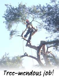KG Jan 2012 Tree Surgeon