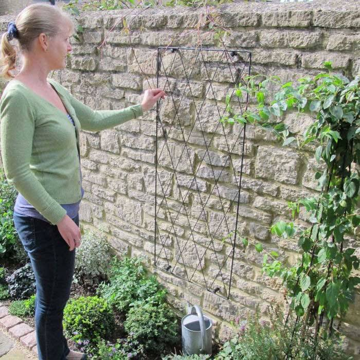 So Which Plants Are Best To Grow Up A Metal Garden Trellis? There Are Many  Types Of Climbing Plants To Choose From, And Your Choice Might Be Dependent  Upon ...