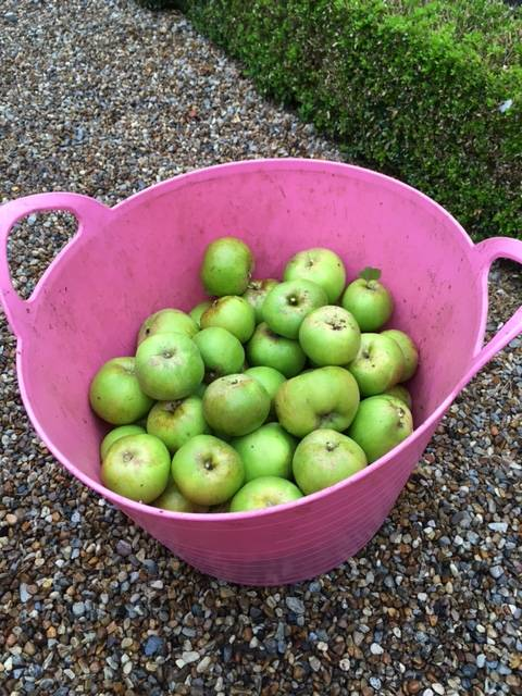 bramley harvest
