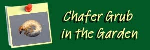 Chafer Ai Header