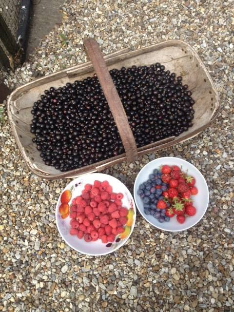 fruit harvest june 2017
