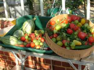 Tomatoes in the Kitchen Garden