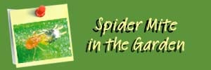 Spider Mite Ai Header