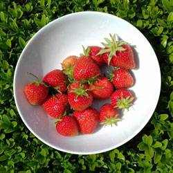 Strawberries-080616