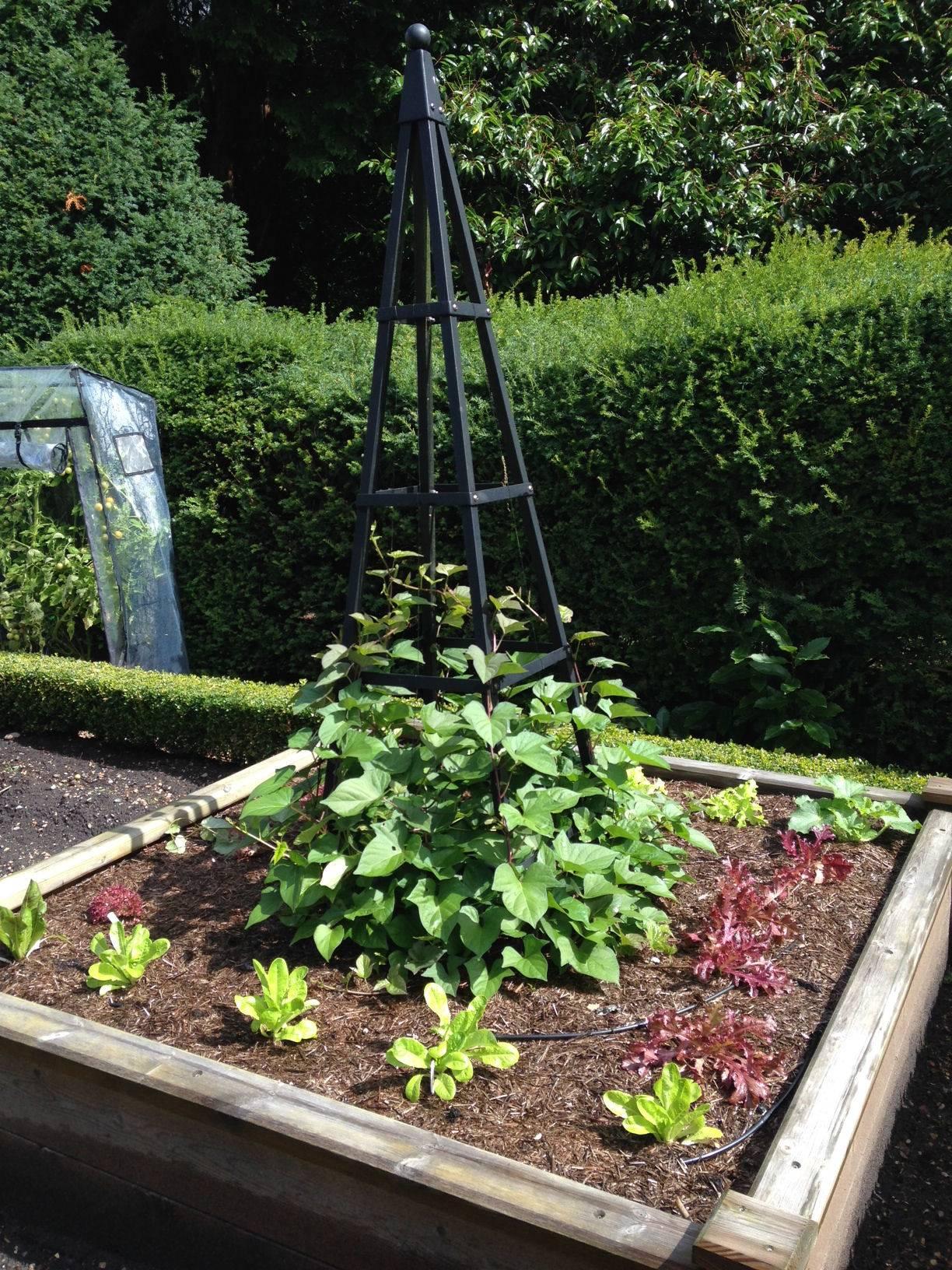 Kitchen Garden Blog Weekly Kitchen Garden Blog Amazing Romanesco Cauliflower