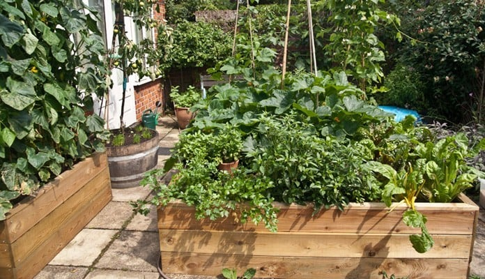 6ft x 8ft Allotment Raised Beds, Mrs. Titchiner - Suffolk