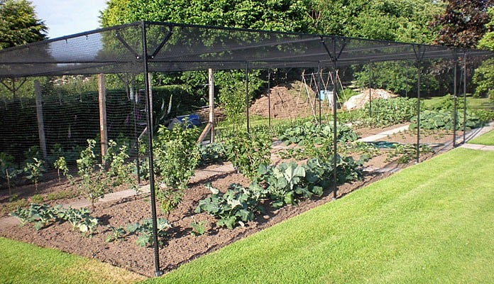 15 x 7m Bespoke Steel Fruit Cage, Mr Haigh - North Yorkshire