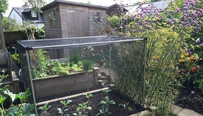 Superior Raised Beds and Vegetable Cage, Mr S - Kent