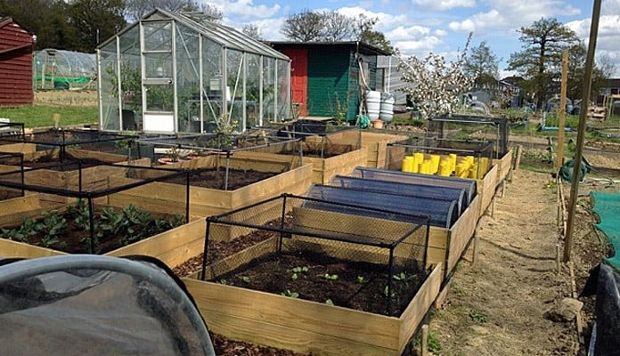 4ft x 4ft Allotment Raised Beds and Longrow Super Cloches, Mrs Hine - Kent