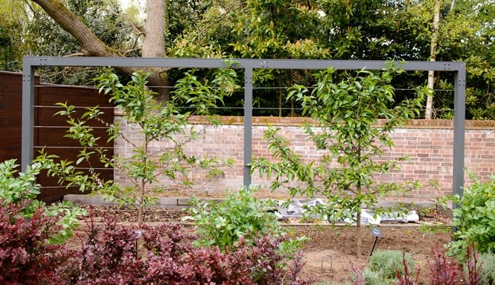 Contemporary Fruit Tree Frame