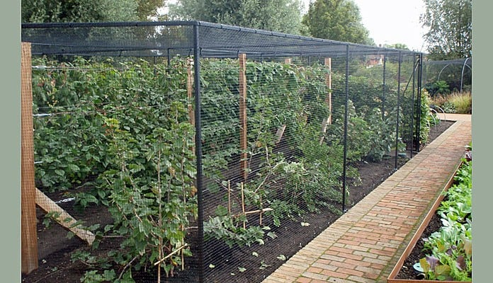 Fruit Cage Steel Angled 1