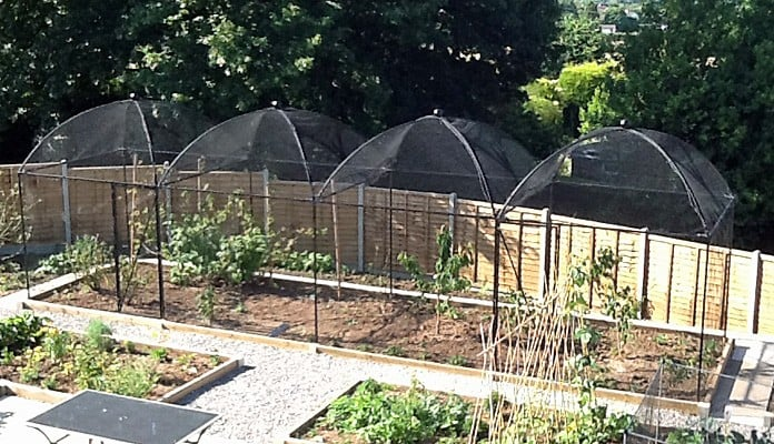 2.5m x 10m Dome Roof Steel Fruit Cage, Ms Burnett - Gwent