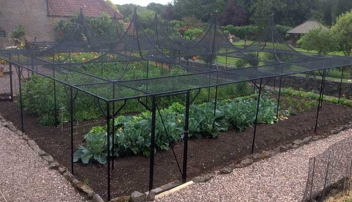 Fruit Cage Steel Peaks with Cut Out 1