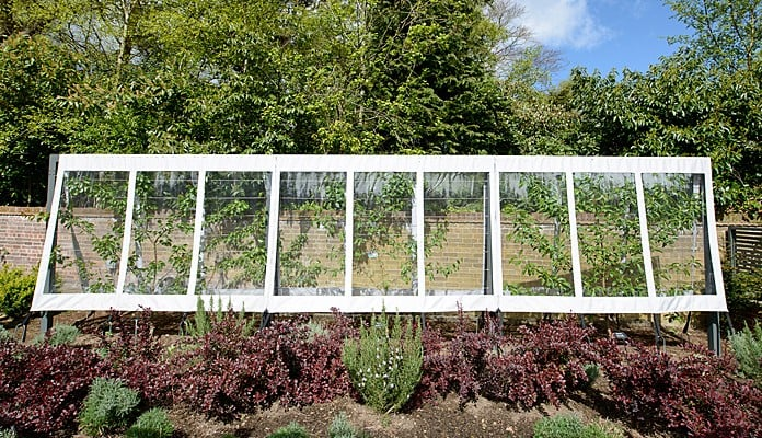 Contemporary Fruit Tree Cover & Frame
