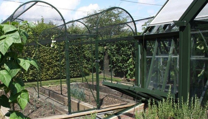Roman Arch Fruit Cage - Colour matched to Greenhouse