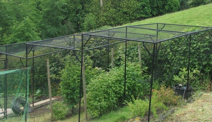 Stepped Fruit Cage