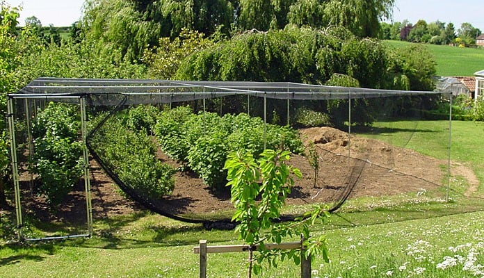 14m x 7m Aluminium Fruit Cage, Mr Butterfield - Lincolnshire