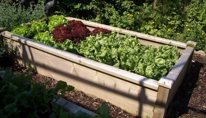 4ft x 8ft Superior Raised Beds, Mr Barnard - Hampshire