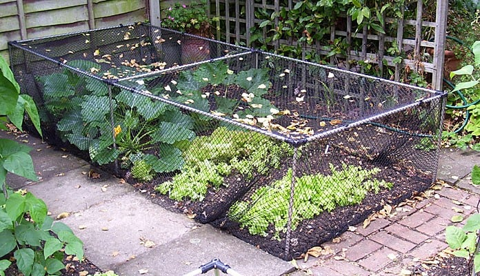 Build Your Own Vegetable Cage, Mr and Mrs Emms - London