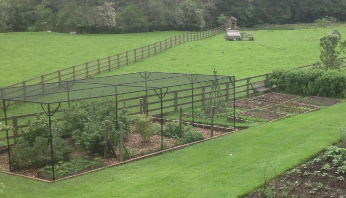 7m x 4.5m Steel Fruit Cage, Mr Davis - North Yorkshire