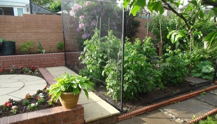 Bespoke Steel Fruit Cage