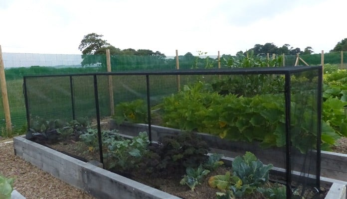 4.45 x 0.9m Bespoke Portable Steel Brassica Cage - Mr and Mrs Ford, Devon