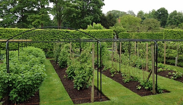 Curved Steel Fruit Cage 3