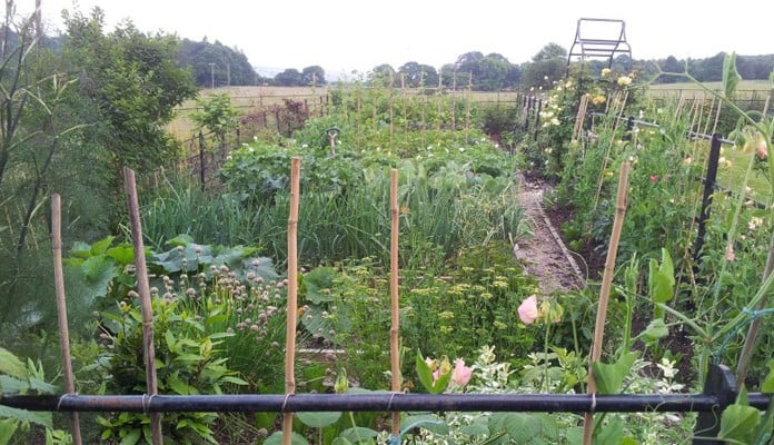 Kitchen Garden with Ogee Arch in background