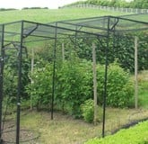 Fruit Cage Steel Stepped