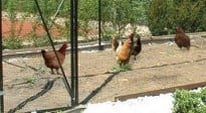 Walk In Steel Poultry Cages FAQS