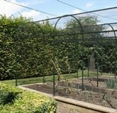 Fruit Cage Steel Roman Arch 1