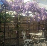Growing Support Structure Wisteria