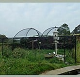 Fruit Cage Steel Dome for Dovecote