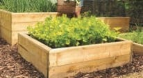 Why Raised Beds are So Popular