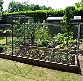Fruit and Veg Cages Low Height