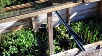 Making space in the cold frame