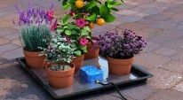 Waterwise in the Garden