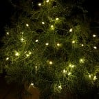 40 LED Fairylights with Auto Timer for Indoor/Outdoor Use