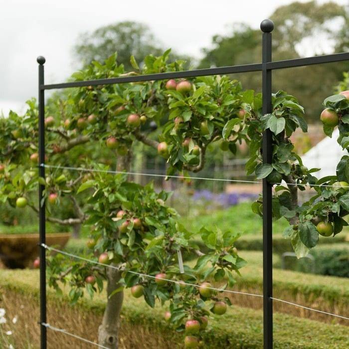 Espalier Growing Frame Harrod Horticultural