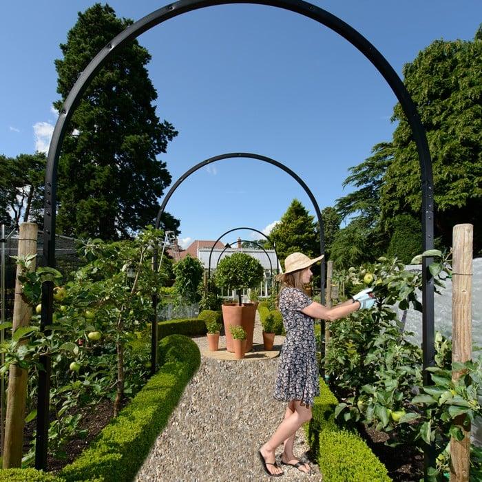 Harrod Single Hoop Arch Garden Arches At Harrod